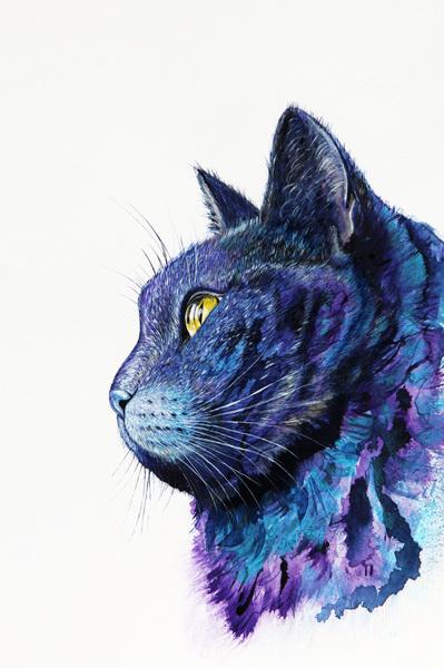 Cat by Nika_Akin