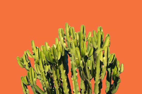 Bold Cactus by Uma Gokhale
