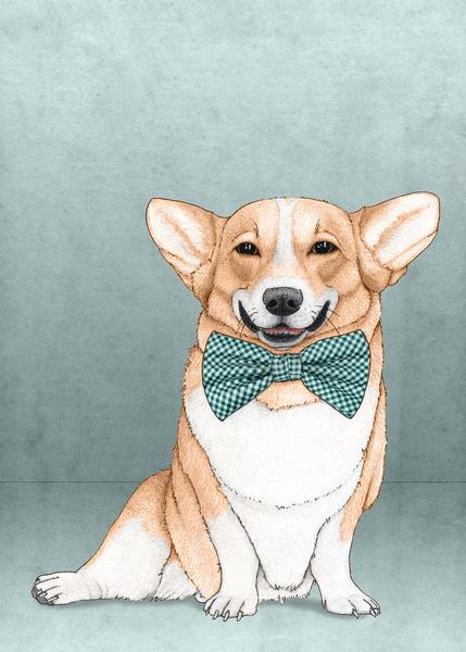 Corgi Dog by Barruf