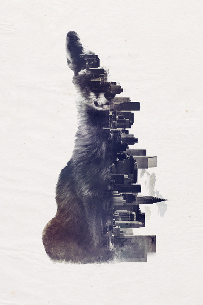 Fox from the city by Robert Farkas