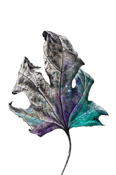Leaf by Nika_Akin