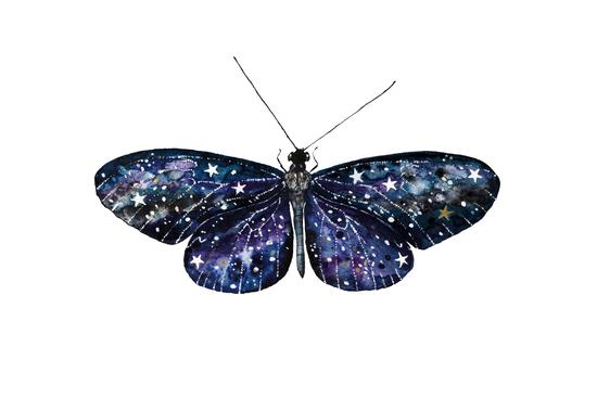 Butterfly by Nika_Akin