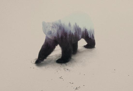 Polar Bear by Andreas Lie