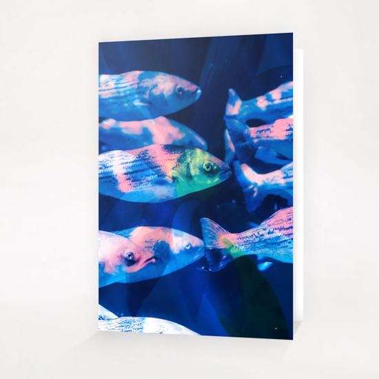 Colorful fish Greeting Card & Postcard by mmartabc