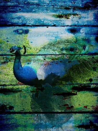Peacock I  Mural by Irena Orlov